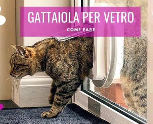 gattaiola vetro gatti scelta installazione