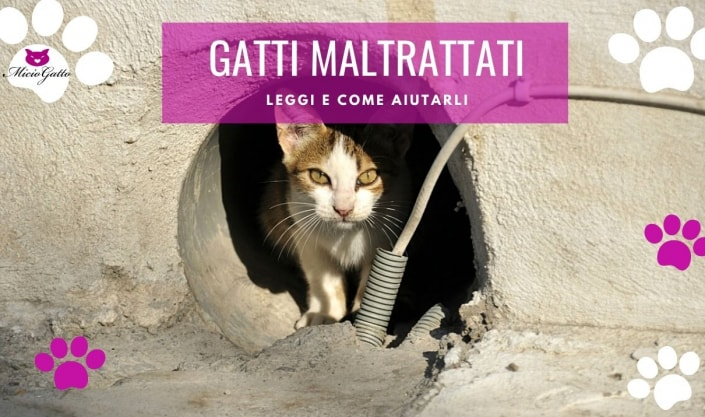 gatti maltrattati maltrattamento cosa fare