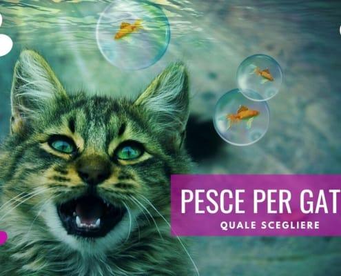 pesce per gatti quale dare come scegliere