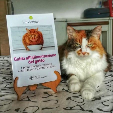 Guida alimentazione gatto Lady