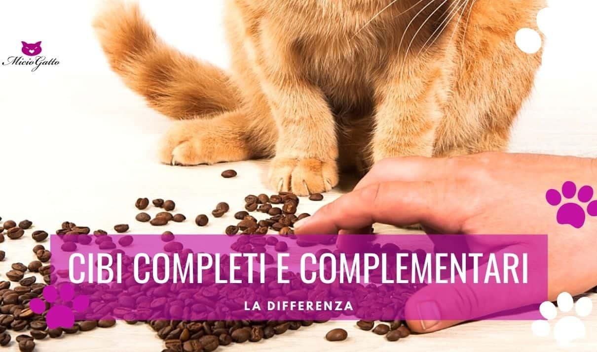 differenza tra cibi completi e cibo complementari per gatti