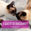 gatti che si baciano baci tra gatti baciare il gatto
