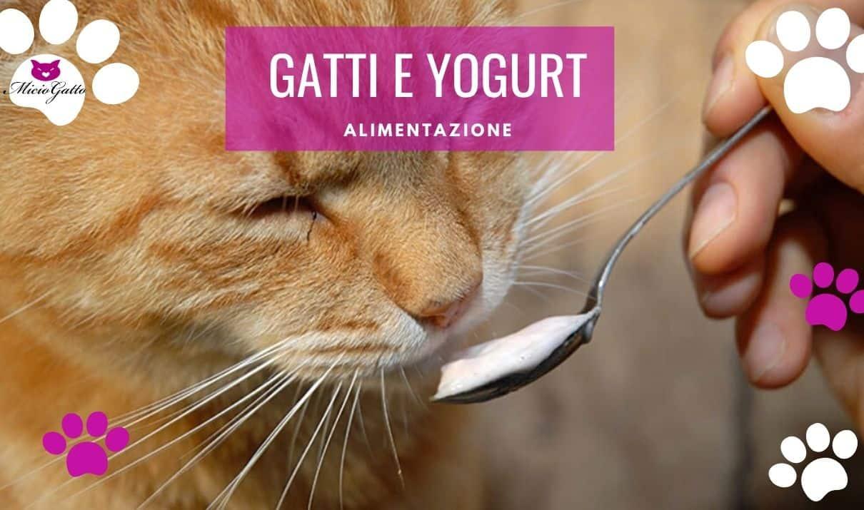 gatti e yogurt possono mangiarlo