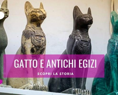 gatto egiziani