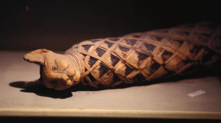 Gatto egizio mummificato