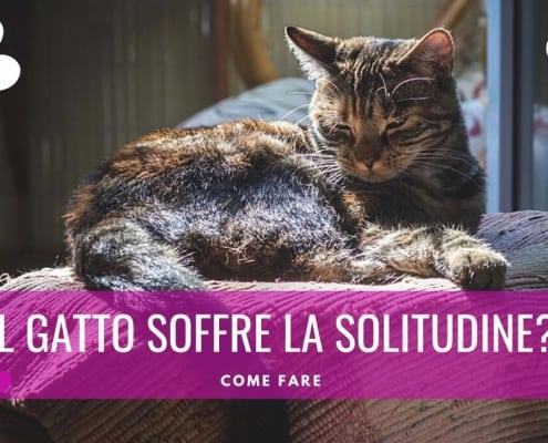 gatto soffre solitudine