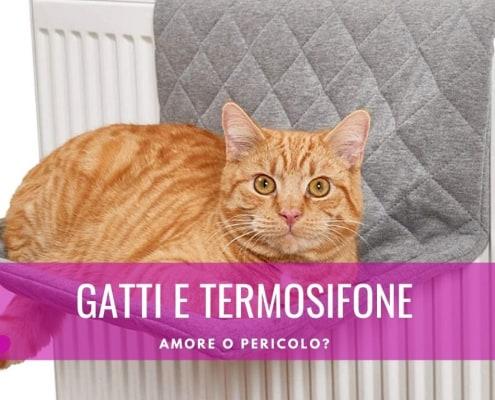 gatto termosifone protezione cuccia amaca lettino