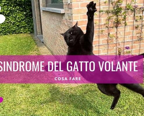 gatto volante caduta gatto cosa fare