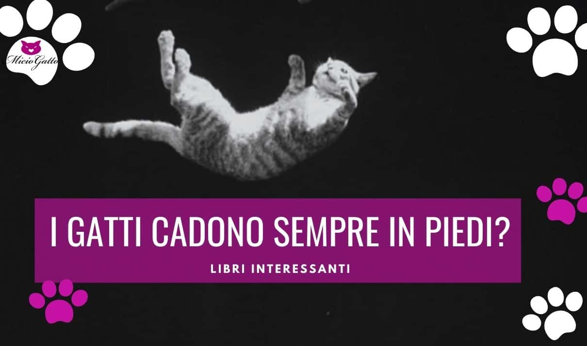 i gatti cadono sempre in piedi gatto che cade
