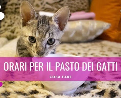 orari pasti gatto