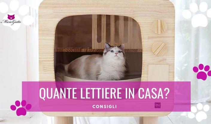 quante lettiere per due gatti condividere lettiera