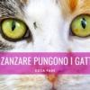 zanzare pungono gatti antizanzare gatto