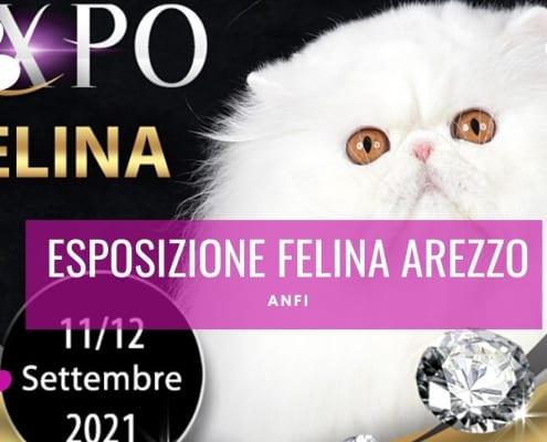 esposizione felina arezzo settembre 2021