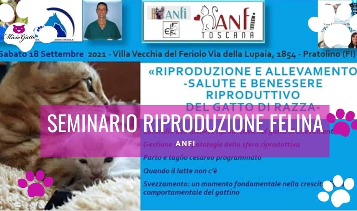 seminario riproduzione felina anfi settembre 2021