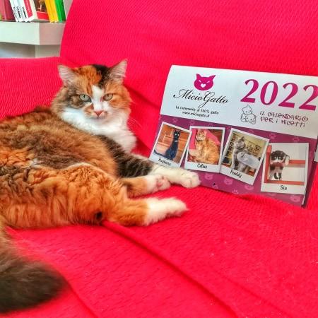 calendario miciogatto 2022 con LaDY