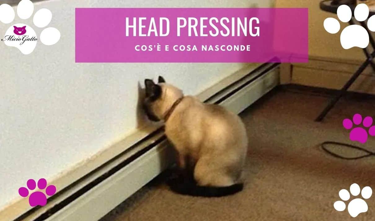 head pressing gatto sintomi problemi