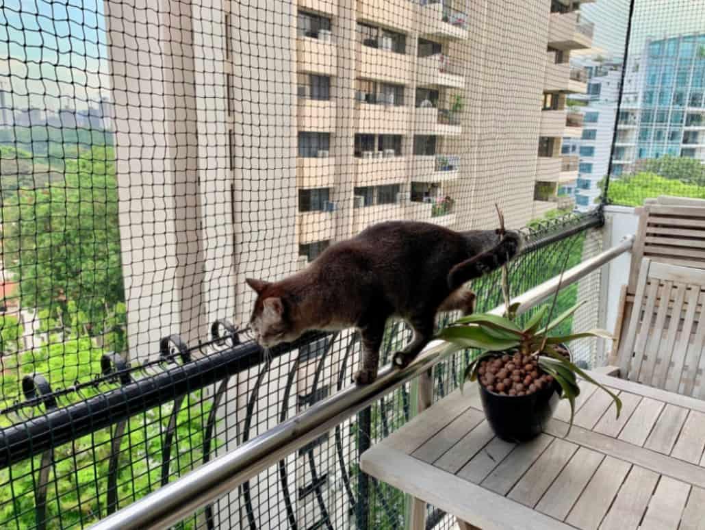 rete protezione balconi per gatti