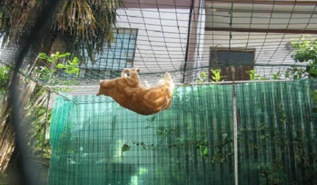 reti per gatti balcone