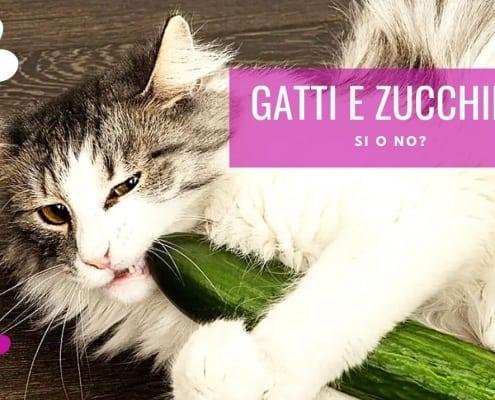 gatti e zucchine possono manigare