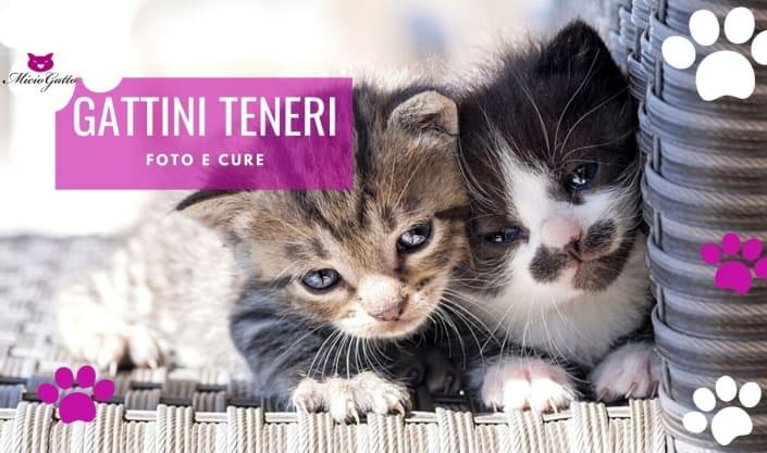 gattini teneri foto cure piccoli